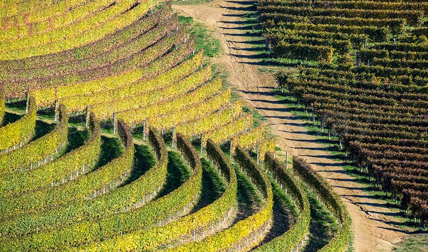 Vigna in Monferrato